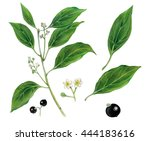 realistic botanic illustration... | Shutterstock . vector #444183616