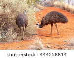 Couple Of Emus In Red Desert...