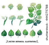 vector leaves and flowers... | Shutterstock .eps vector #444275788