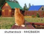 Ginger Cat Sits And Looks At...