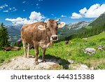 brown cow in front of mountain... | Shutterstock . vector #444315388