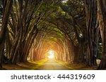 Light Added  Cypress Tree...