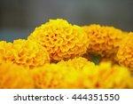 Yellow Marigold Flower On Blur...