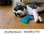 Sweet Puppy Sleep On The Floor
