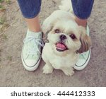 Stock photo dog s paw feet next to the owner walking together instagram toned 444412333