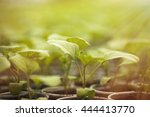 rows of green organic plant... | Shutterstock . vector #444413770