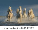 Running Horses In Water.  Equu...