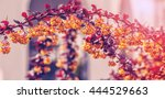 beautiful spring background.... | Shutterstock . vector #444529663