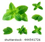 fresh mint isolated on white.... | Shutterstock . vector #444541726