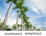 palm trees on blue sky and... | Shutterstock . vector #444699310