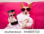 Stock photo chihuahua dog relaxing at spa wellness center wearing a bathrobe and funny sunglasses taking a 444805723