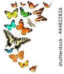 Stock photo colorful butterflies isolated on a white background wildlife insects colors nature 444822826