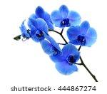 blue flower orchid on white... | Shutterstock . vector #444867274