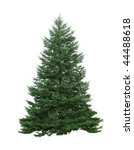 Single pine tree isolated on white background - stock photo