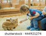 boy play with the rabbits in... | Shutterstock . vector #444921274
