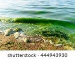 algal blooms  green surf beach... | Shutterstock . vector #444943930