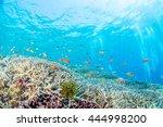 coral garden | Shutterstock . vector #444998200