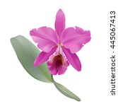 orchid.  hand drawn vector... | Shutterstock .eps vector #445067413