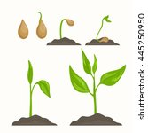 life cycle of plant evolution... | Shutterstock .eps vector #445250950
