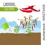 garden. chili pepper. plant... | Shutterstock .eps vector #445271410