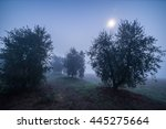 olive garden at night in fog... | Shutterstock . vector #445275664