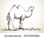 sketch of two hump camel  hand... | Shutterstock .eps vector #445290586