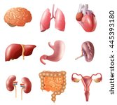 different flat human organs set ... | Shutterstock .eps vector #445393180