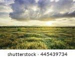 Grassland  A Prairie  A Pampas...