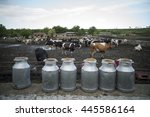 color image of some holstein... | Shutterstock . vector #445586164