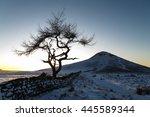 Lone Tree In A Winter Landscap...