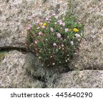 Wild Flowers Growing Out Of A...