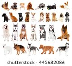 Group Of Cute Dogs  Isolated On ...