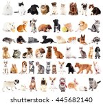 Stock photo group of cute pets isolated on white 445682140