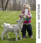 Small photo of Cute, young girl, bottle feeding milk to a Katahdin lamb