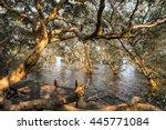 Wooden Walkway And Mangrove...