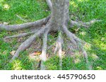 Tree Roots And Green Grass