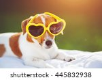 Dog Sunning In Glasses  Hidden...
