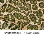 Skin of green toad, spotted natural background
