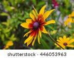 Gazania Flowers.yellow Flowers...