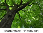 looking up at the canopy of a... | Shutterstock . vector #446082484
