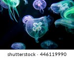 Jellyfishes With Illuminated...