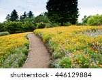 A Pathway Through A Field Of...