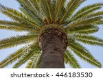 up view on palm tree with... | Shutterstock . vector #446183530