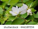 white floral in garden | Shutterstock . vector #446189554