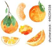 set orange. watercolor food.... | Shutterstock . vector #446234338