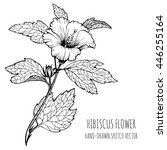 hibiscus  tropical flower.... | Shutterstock .eps vector #446255164