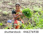 farmer lady plucking fenugreek... | Shutterstock . vector #446276938