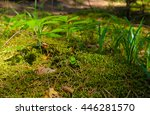 the stems and leaves of young... | Shutterstock . vector #446281570