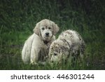 Stock photo two funny labrador puppy 446301244
