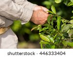 man working in a yerba mate... | Shutterstock . vector #446333404